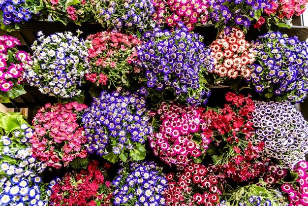 Gänseblümchen vieler farben, die an der fassade eines hauses hängen.