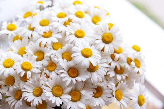 Gänseblümchenblumen auf dem fenster