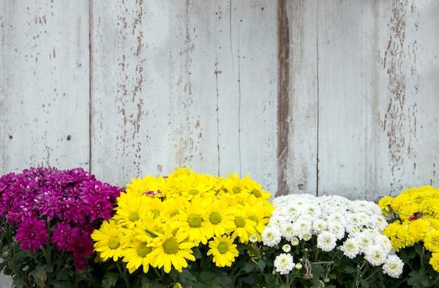 Gänseblümchenblumenstrauch vor weinleseholz