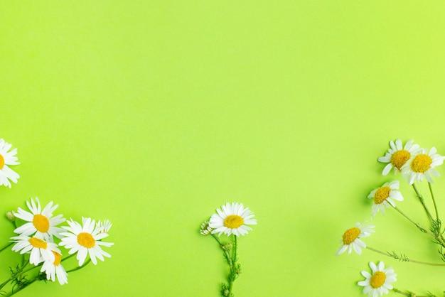 Gänseblümchenkamillenblüten auf grünem hintergrund mit kopierraum