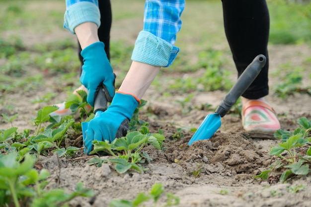 Gärtner bearbeitet boden mit handwerkzeugen, frühlingsgartenarbeit