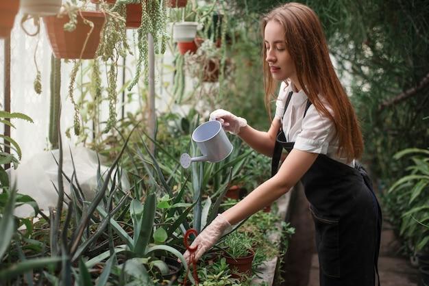 Gärtner bewässerungspflanze im gewächshaus