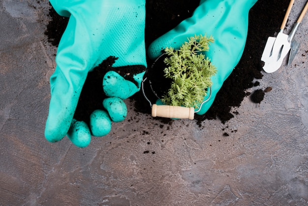 Gärtner, der eine grünpflanze im eimer pflanzt