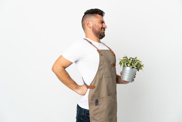 Gärtner, der eine pflanze über isoliertem weißem hintergrund hält und an rückenschmerzen leidet, weil er sich bemüht hat