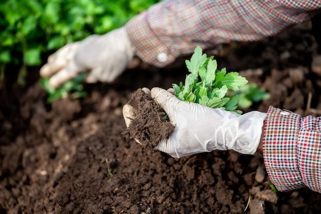 Gärtner, der handschuh trägt, pflanzt jungen baum auf schwarzer erde im garten