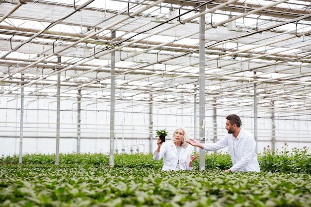 Gärtner des jungen mannes, der auf pflanze in händen seines kollegen zeigt