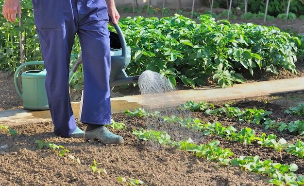 Gärtner gießen