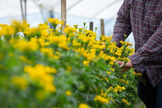 Gärtner hält ringelblume im feld