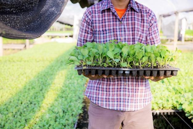 Gärtner halten bio-gemüsetabletts mit sonnenlicht.