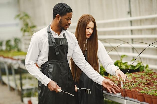 Gärtner im gewächshaus arbeiten. mann und frau in schürzen. pflanzenpflege.
