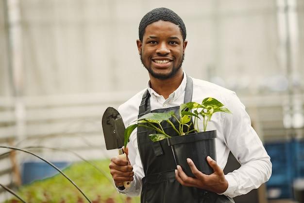 Gärtner in einer schürze. afrikaner in einem gewächshaus. blumen in einem topf.