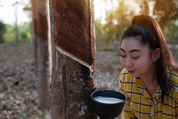 Gärtner junge asiatin schaut auf eine volle tasse rohe para-gummimilch des baumes
