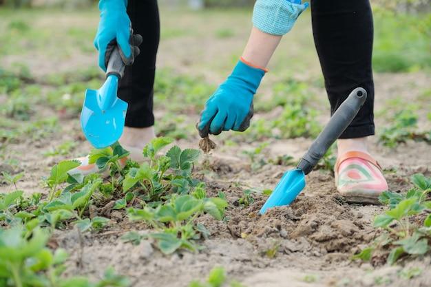 Gärtner kultiviert boden mit handwerkzeugen, frühlingsgartenarbeit