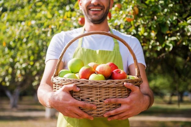 Gärtner mit reicher ernte. abgeschnittenes bild eines jungen gärtners, der einen korb mit äpfeln hält und lächelt, während er im garten steht