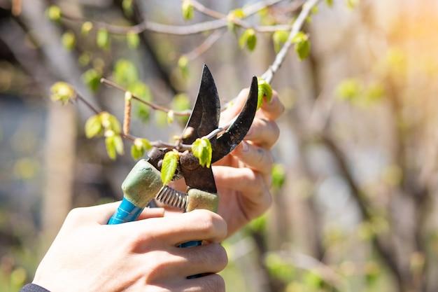 Gärtner schneidet kleine äste im garten