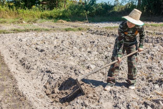 Gärtnerfrau, die hacke hält gemüsegarten für die pflanzung von süßkartoffeln