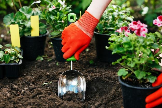 Gärtnerfrau, die morgens blumen im sommergarten pflanzt.