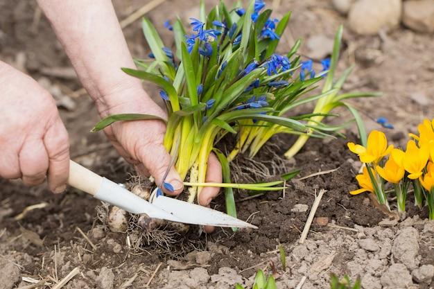 Gärtnerhände, die blumen am garten pflanzen