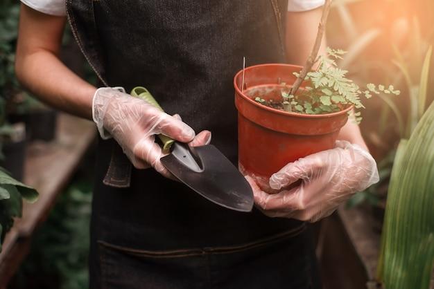 Gärtnerhände halten topf mit pflanze und schaufel