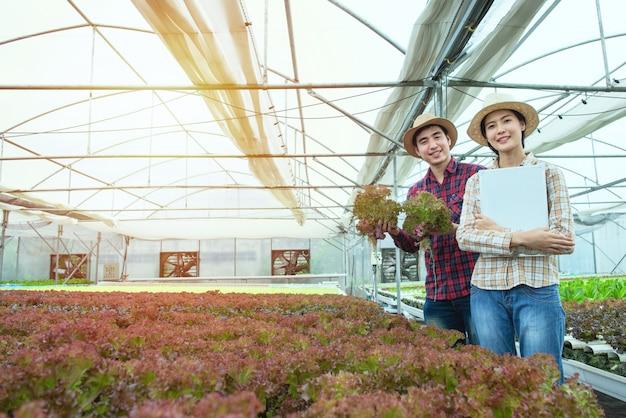 Gärtnerhand des asiatischen mannes und der asiatischen frau halten kopfsalat und weißes brett in der hand