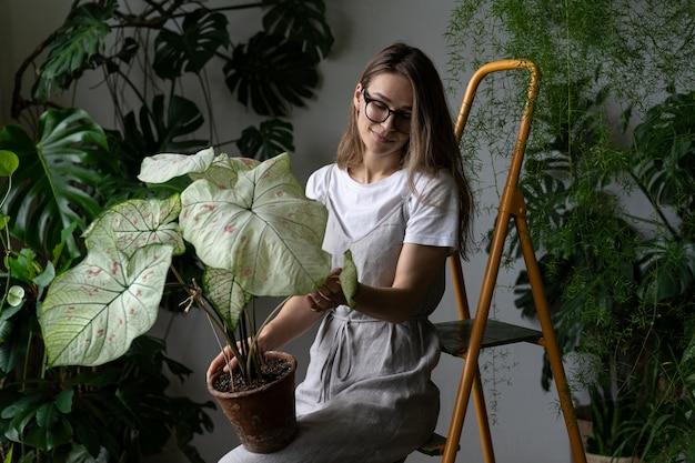 Gärtnerin in einem grauen leinenkleid, caladium-zimmerpflanze mit großen weißen blättern und grünen adern im tontopf haltend, auf trittleiter in ihrem haus sitzend. liebe zu pflanzen. gartenarbeit im innenbereich