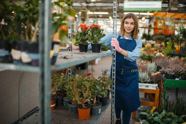 Gärtnerin in handschuhen und schürze, hausblumenverkauf, gartengeschäft. frau verkauft pflanzen im blumengeschäft, verkäufer