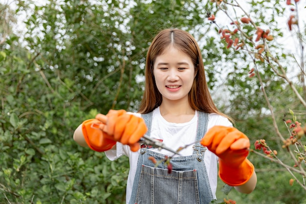 Gärtnerin konzept ein zweig des maulbeerbaums, der von einem greenskeeper mit einer gartenschere geschnitten wird, um die form des gesamten baumes zu formen.