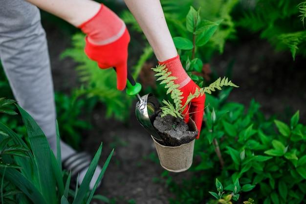 Gärtnerin pflanzt blumen in ihrem garten, gartenpflege und hobbykonzept.