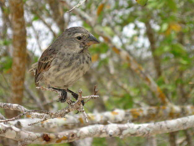 Galapagos vogel
