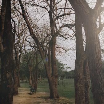 Ganz park saison einsam gefallen herbst konzept