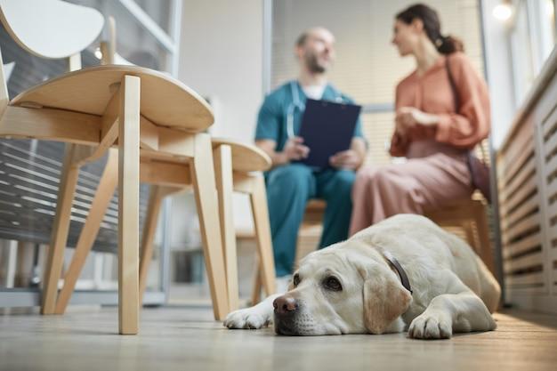 Ganzaufnahme des weißen labrador-hundes, der in der tierklinik wartet, mit einer jungen frau, die mit einem tierarzt im hintergrund spricht, kopierraum