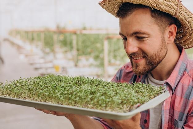 Gardner mit microgreens in seinem gewächshaus