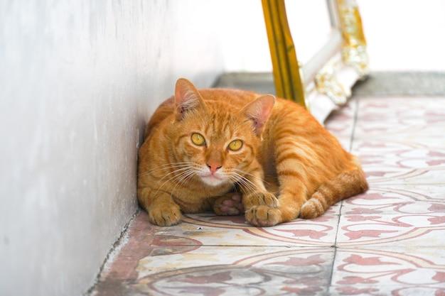 Garfield katze lag auf dem boden und starrte uns an.