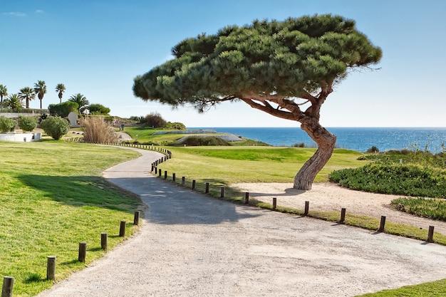 Garten an der küste portugals.