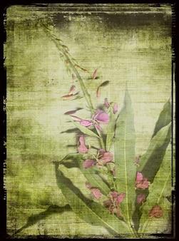 Garten blume weidenröschen ursprüngliche gescannte rosa umrahmt