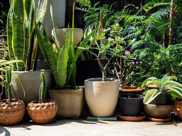 Garten im freien mit kaktus und verschiedenen grünpflanzen in vielen töpfen auf dem boden in der nähe des gebäudes.