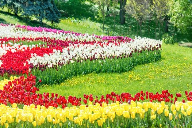 Garten mit bunten tulpen und grünem gras im park