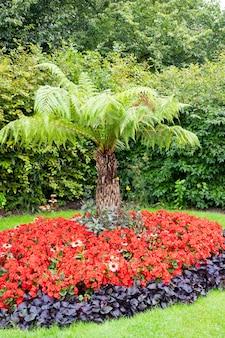 Garten, pflanzenzusammensetzung im regents park, london. live-palme im garten.