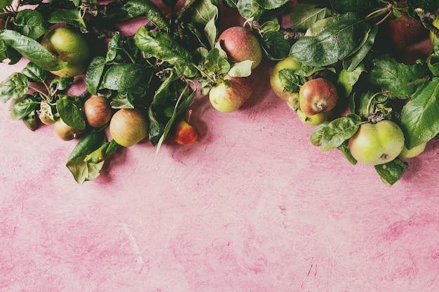 Gartenäpfel mit blättern auf rosa hintergrund