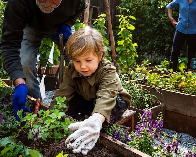 Gartenarbeit des vatis und des sohns draußen zusammen transanplanting