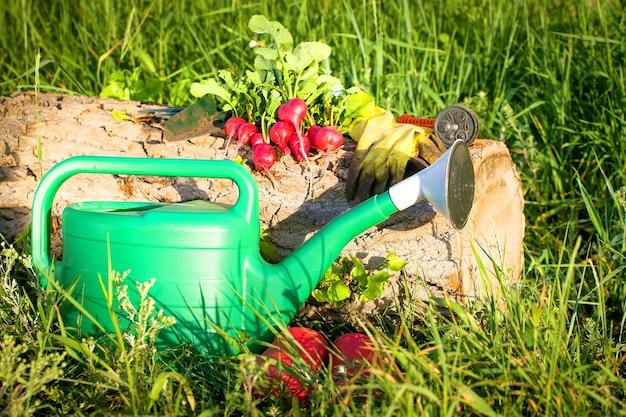 Gartenarbeit, die ein gemüse anbaut