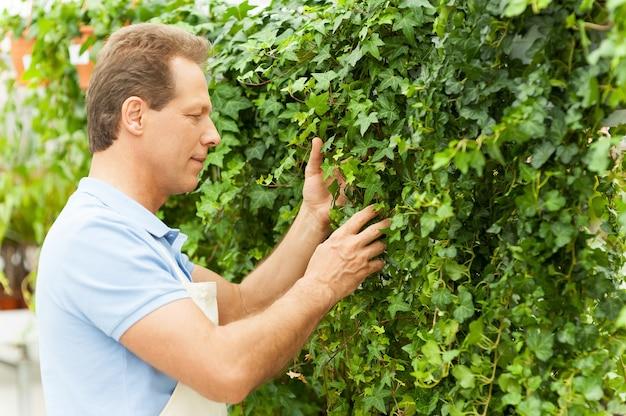 Gartenarbeit ist meine leidenschaft. seitenansicht eines gutaussehenden reifen mannes in einheitlicher gartenarbeit