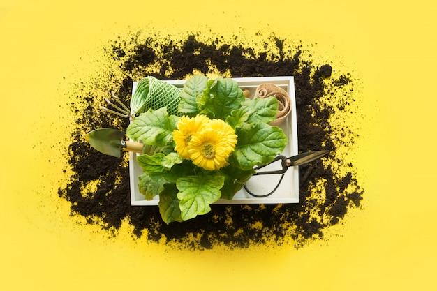 Gartenarbeit mit gerbera-, maut- und blumenanlage im kasten auf gelb.