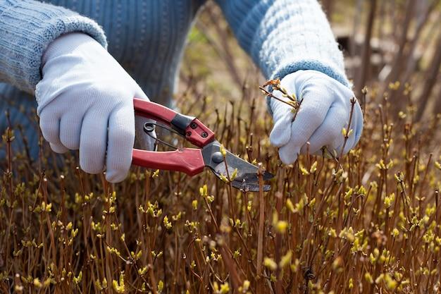 Gartenarbeit mit zweigen und laub. gartenschere nahaufnahme, bei der arbeit