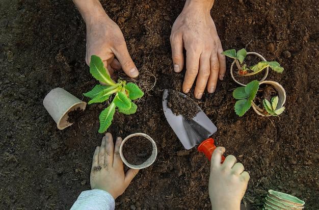Gartenarbeit, pflanzen im garten. garten. tiefenschärfe.