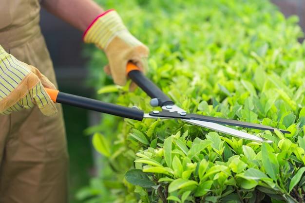 Gartenarbeit schneiden gärtner busch gartengeräte mit einer heckenschere