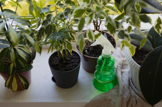 Gartenarbeit zu hause mit wasserflasche