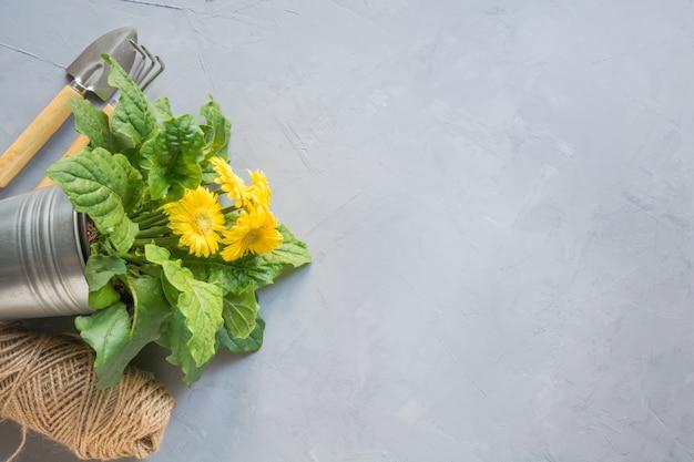 Gartenarbeithintergrund mit gelbem gerbera und maut.