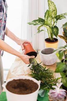 Gartenarbeitkonzept mit den weiblichen händen