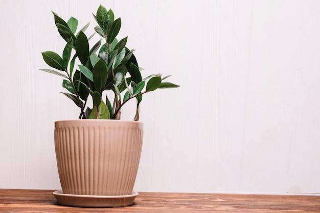 Gartenarbeitkonzept mit pflanzen
